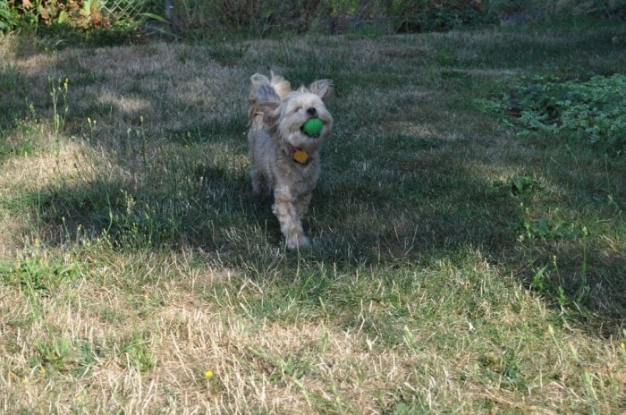 Roxy-Playing-Ball-Outisde-on-August-12th-1-
