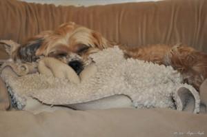 Day 48 - Cuddled Roxy - Angie's Angle