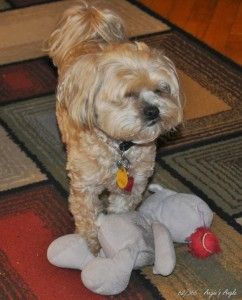 Day 62 - Roxy with both Hippo & Ball