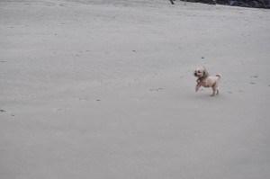 Sunday Beach Trip - Wind and Rain (17)