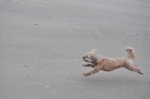 Sunday Beach Trip - Wind and Rain (18)