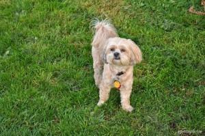 Active Outdoor Roxy (4)
