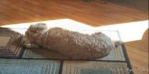 Day 112 - Roxy Sunbathing