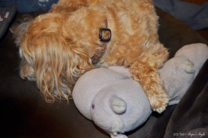 Day 123 - Roxy hugging Hippo