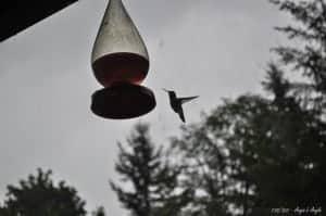 Day 138 - Hummingbird