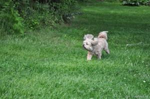 Roxy Playing Free (20)