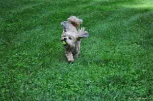 Roxy Playing Free (3)
