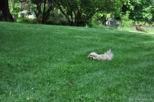 Roxy Playing Free (7)