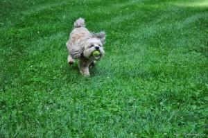 Roxy Playing Free (9)