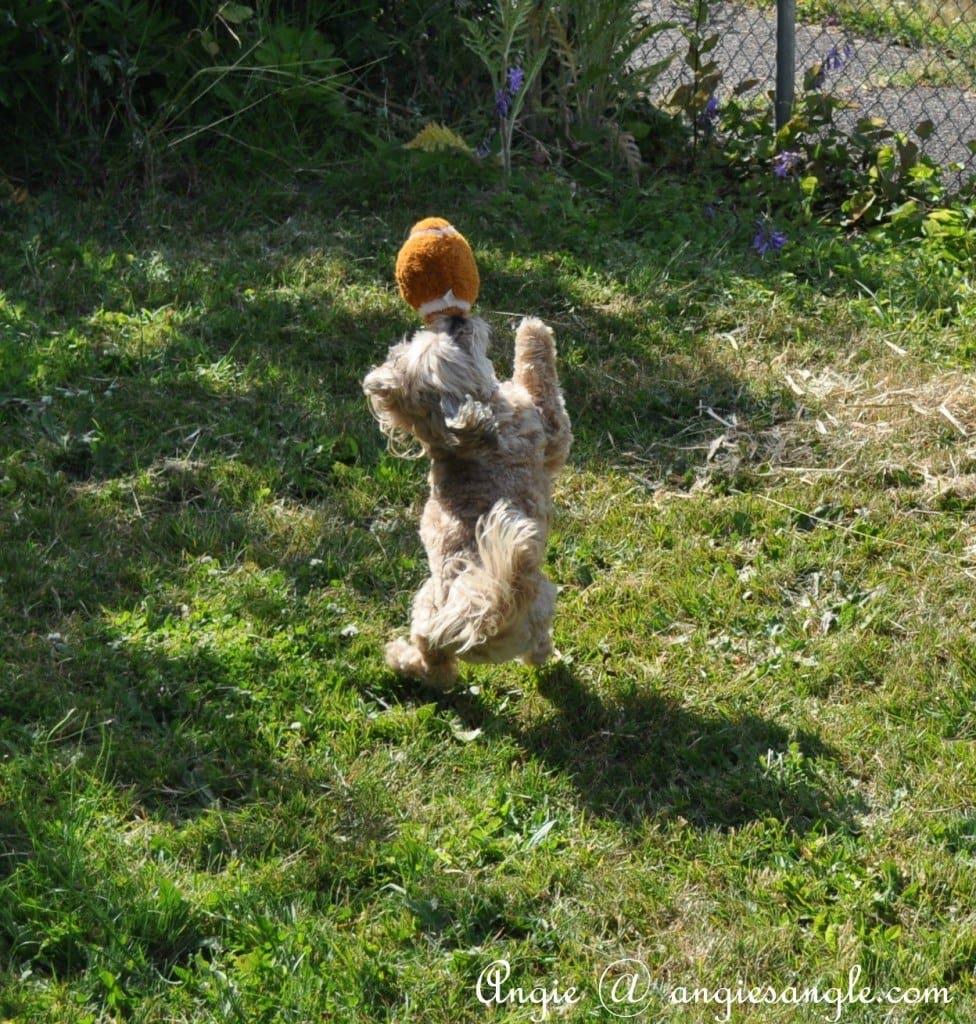 Football Dog - Going Deep