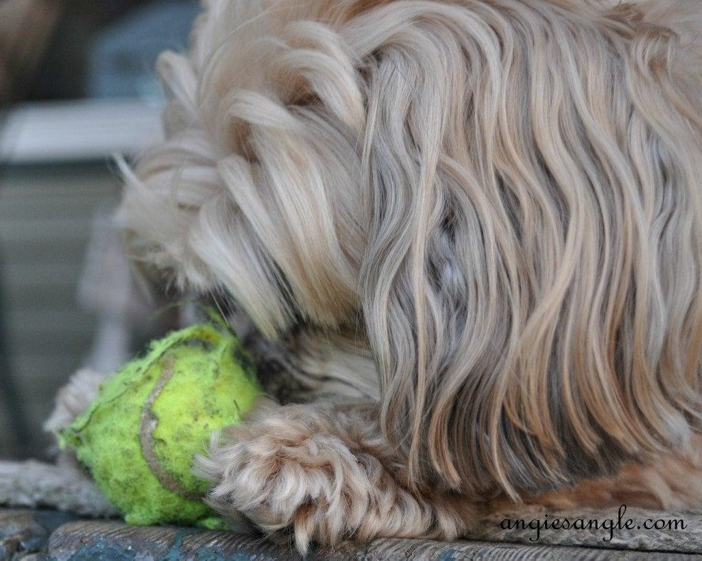 Ball Skilled Puppy - Wordless Wednesday - Roxy Batting the Ball (10)