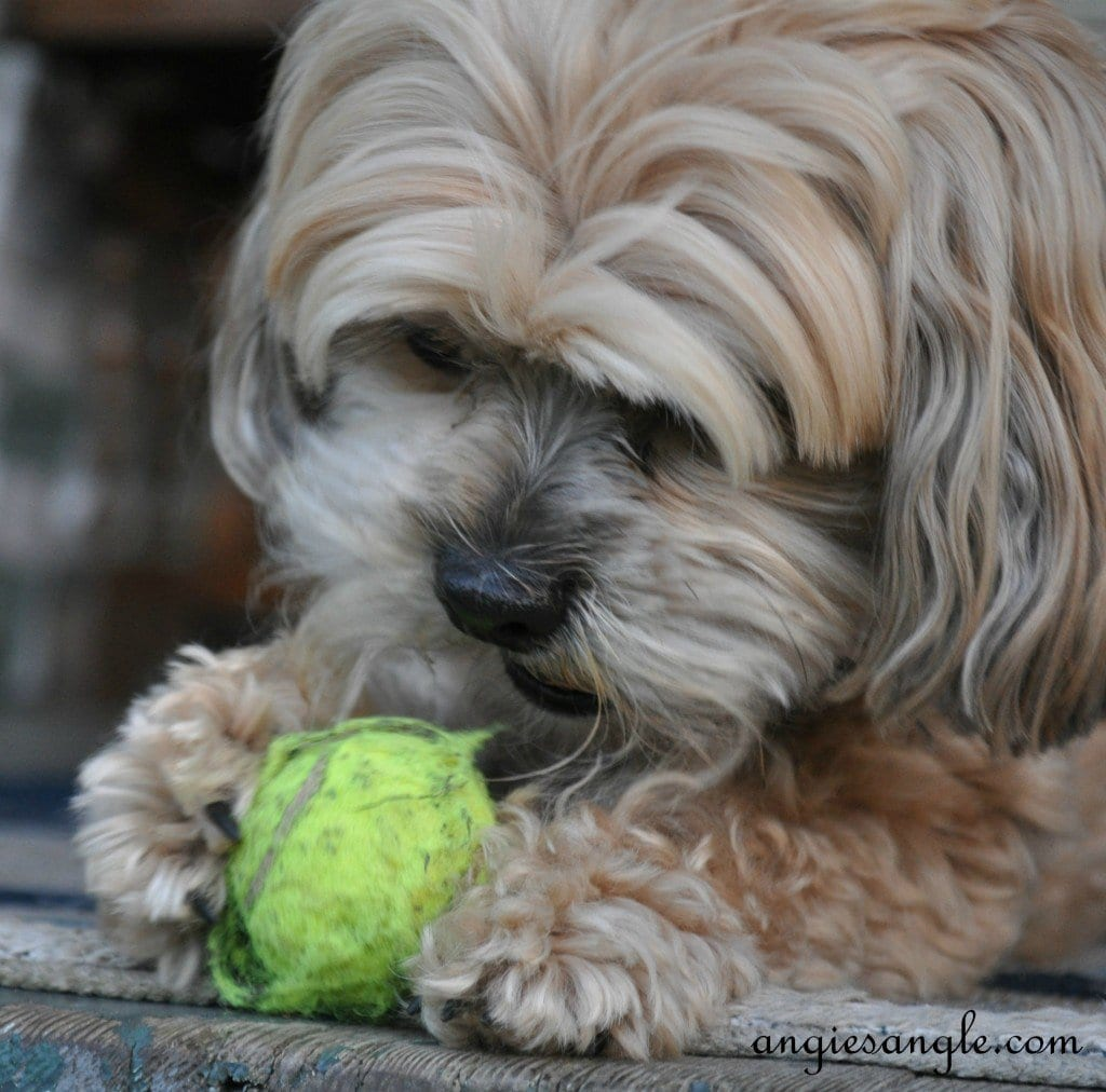 Ball Skilled Puppy - Wordless Wednesday - Roxy Batting the Ball (2)