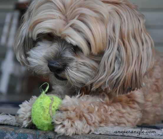 Wordless Wednesday - Roxy Batting the Ball (4)