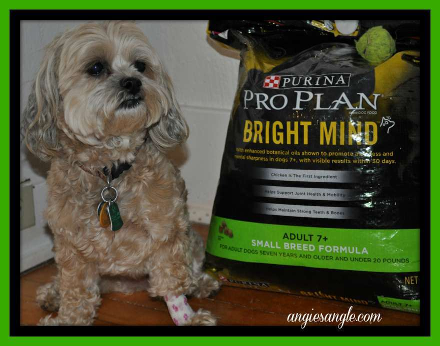 Switching Your Dog To A New Food #BrightMind