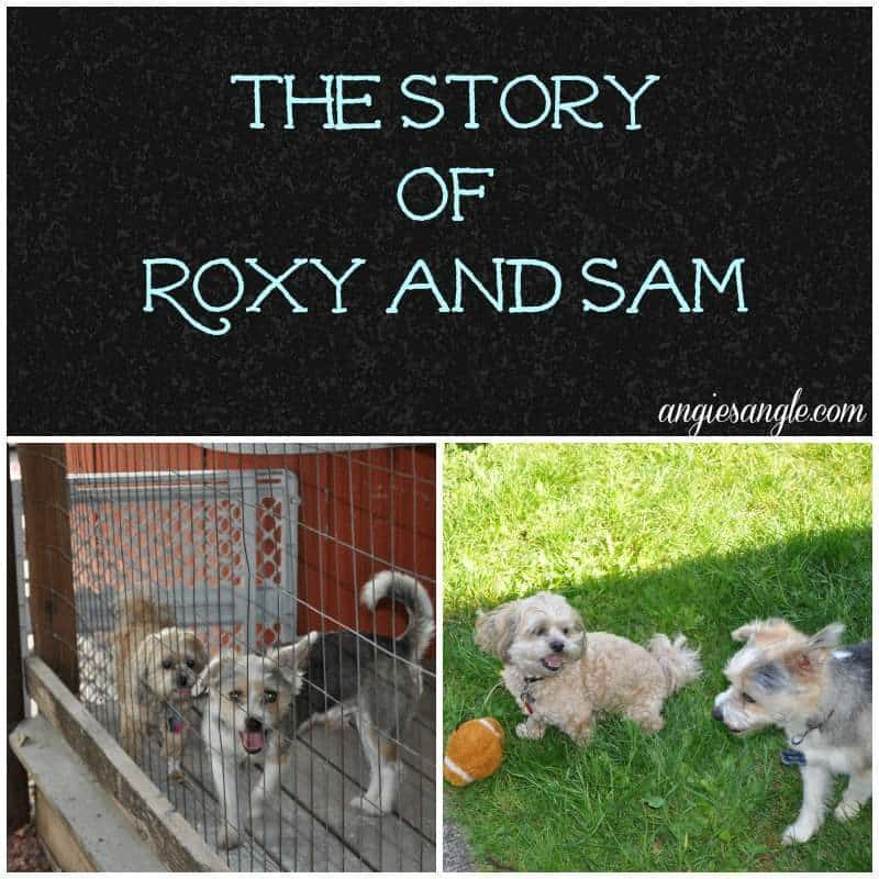 The Story of Roxy and Sam