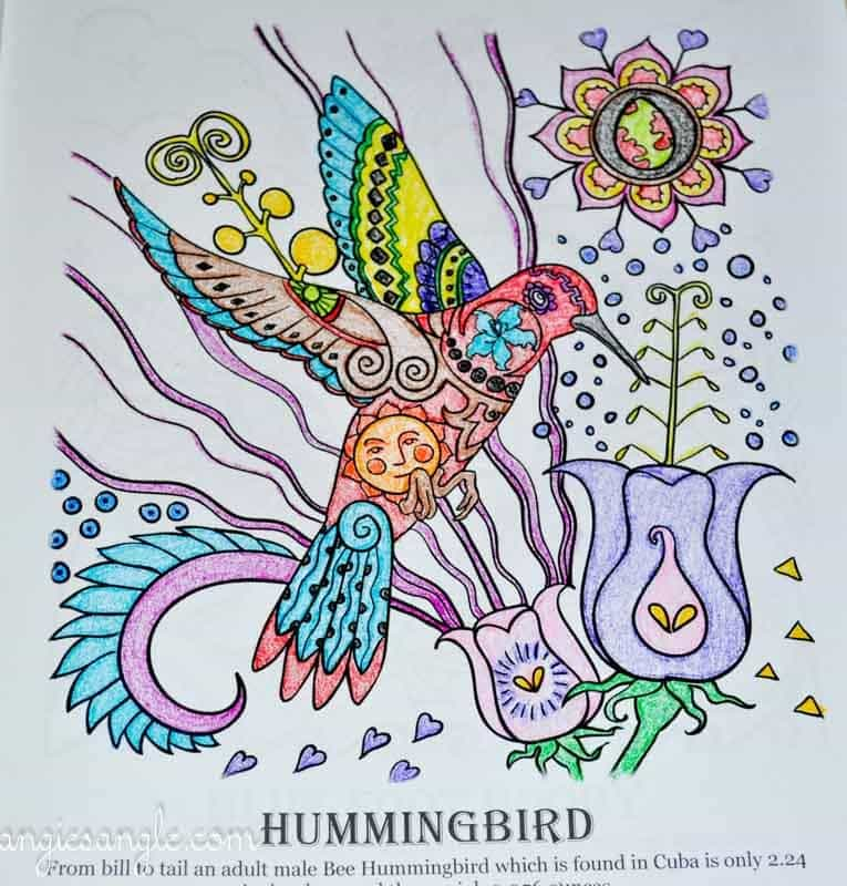 Amazing Birds - Adult Coloring Book - Hummingbird - Fully Colored (2)