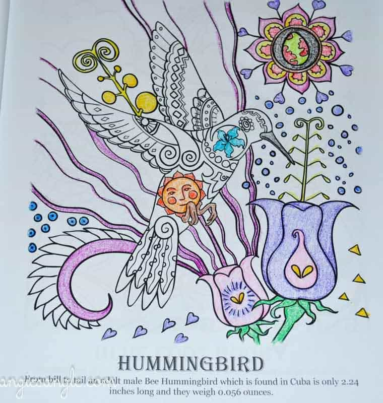 Amazing Birds - Adult Coloring Book - Hummingbird - Half Colored (3)