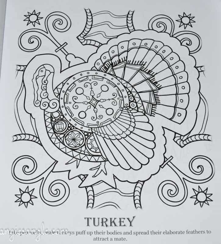 Amazing Birds - Adult Coloring Book - Turkey