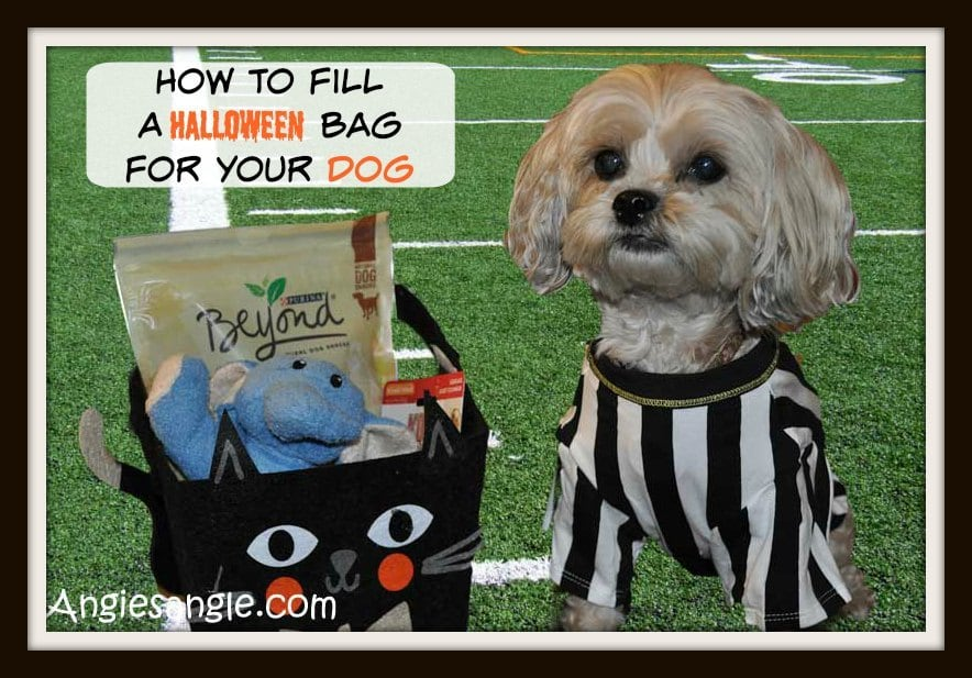 How To Fill A Halloween Bag For Your Dog #BeyondSnacks