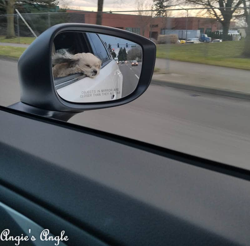 2017 Catch the Moment 365 Week 8 - Day 53 - Roxy cruising in the Mazda CX9