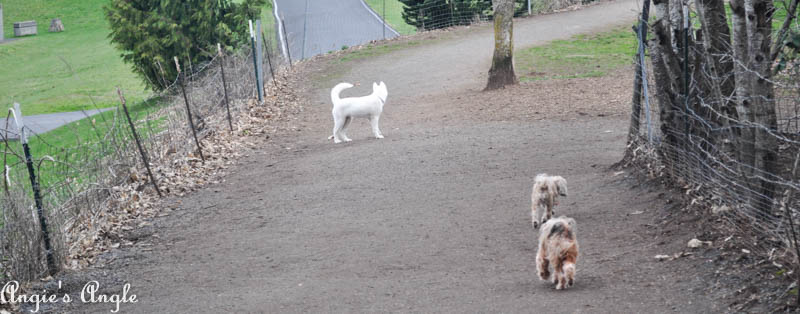 Roxy Has an Adventure to the Dog Park (2)