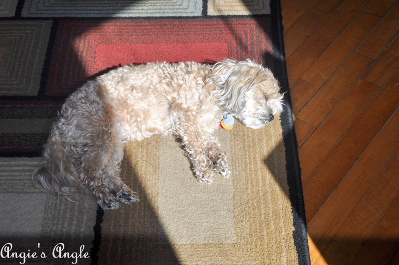 2017 Catch the Moment 365 Week 15 - Day 105 - Laying in the Sun Beams