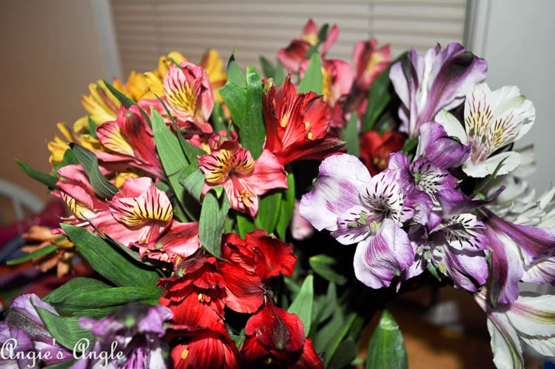 2017 Catch the Moment 365 Week 25 - Day 172 - Anniversary Flowers