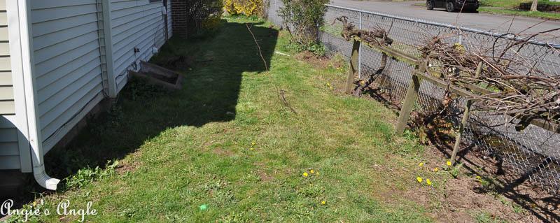 Backyard Now (4 of 8)