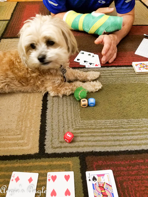 2017 Catch the Moment 365 Week 40 - Day 280 - Roxy Helping Us Play a Game
