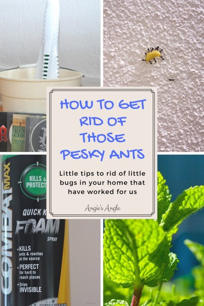 How to Get Rid of Those Pesky Ants