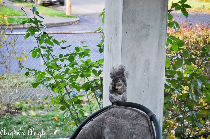 2017 Catch the Moment 365 Week 48 - Day 333 - Squirrel Taking a Seat