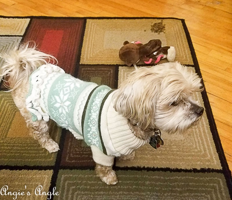 2018 Catch the Moment 365 Week 1 - Day 3 - Roxy in Sweater