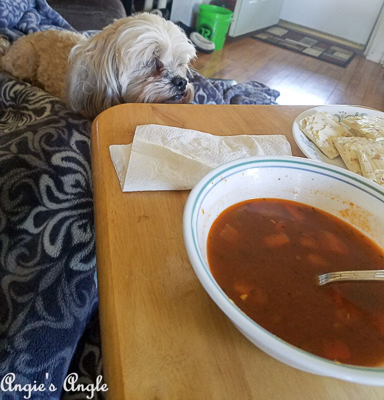 2018 Catch the Moment 365 Week 21 - Day 141 - Soup and Roxy
