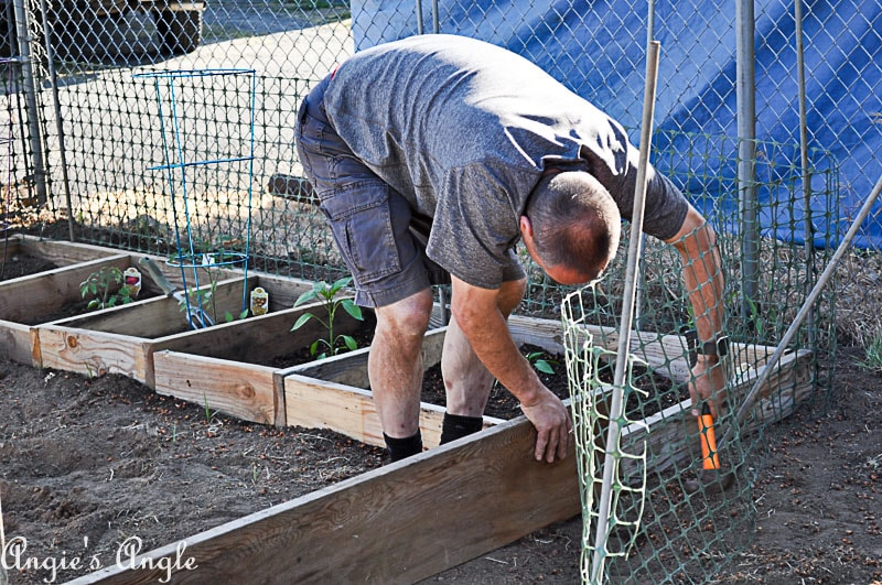 2018 Catch the Moment 365 Week 22 - Day 148 - Garden Boxes
