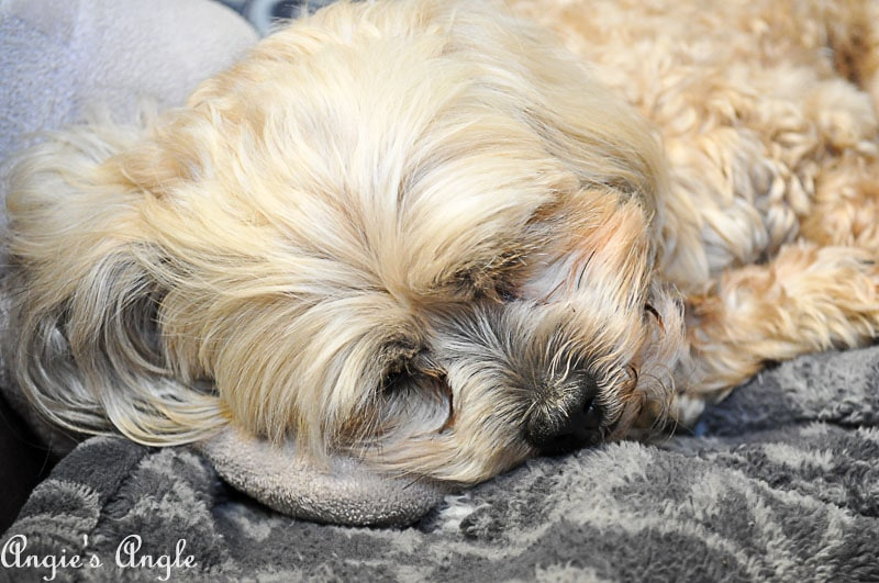 2018 Catch the Moment 365 Week 28 - Day 191 - Curled Roxy