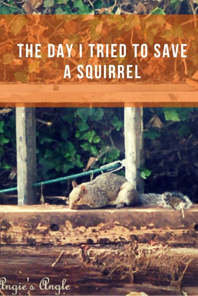 Save a Squirrel - Pin