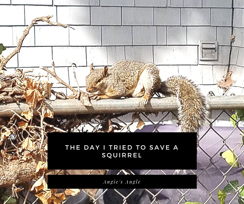 Save a Squirrel - facebook