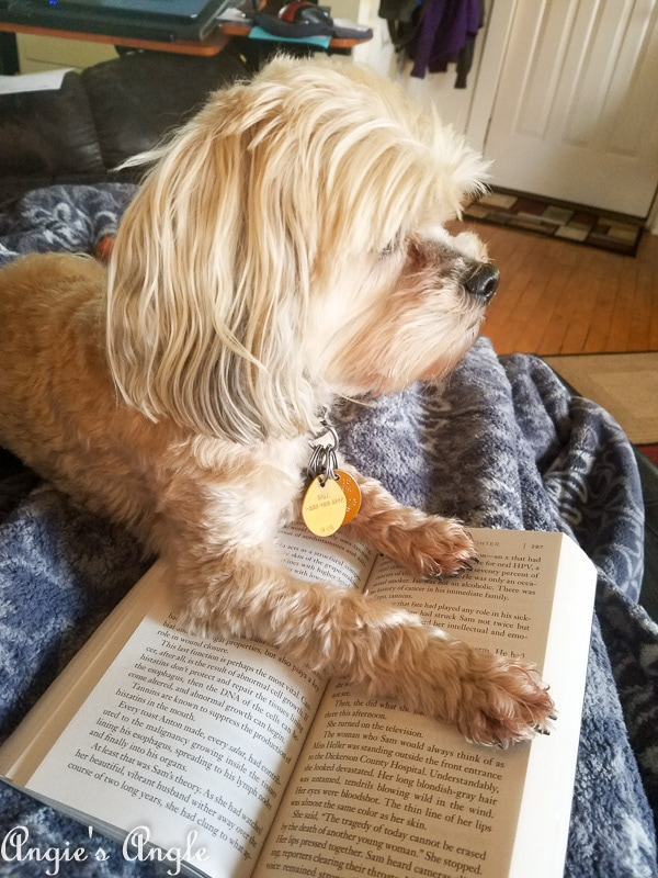 2018 Catch the Moment 365 Week 45 - Day 309 - Roxy Helping Me Read