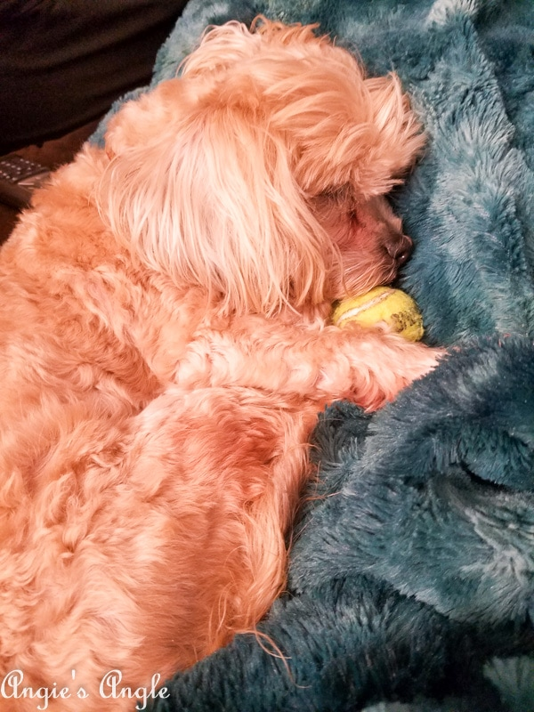 2018 Catch the Moment 365 Week 50 - Day 348 - Roxy Sleeping with her Ball