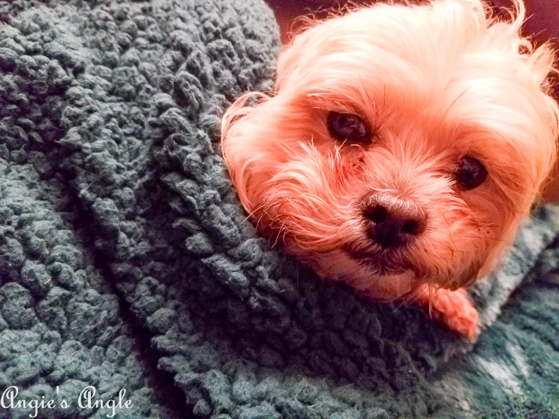 2019 Catch the Moment 365 Week 7 - Day 43 - Roxy Cuddled