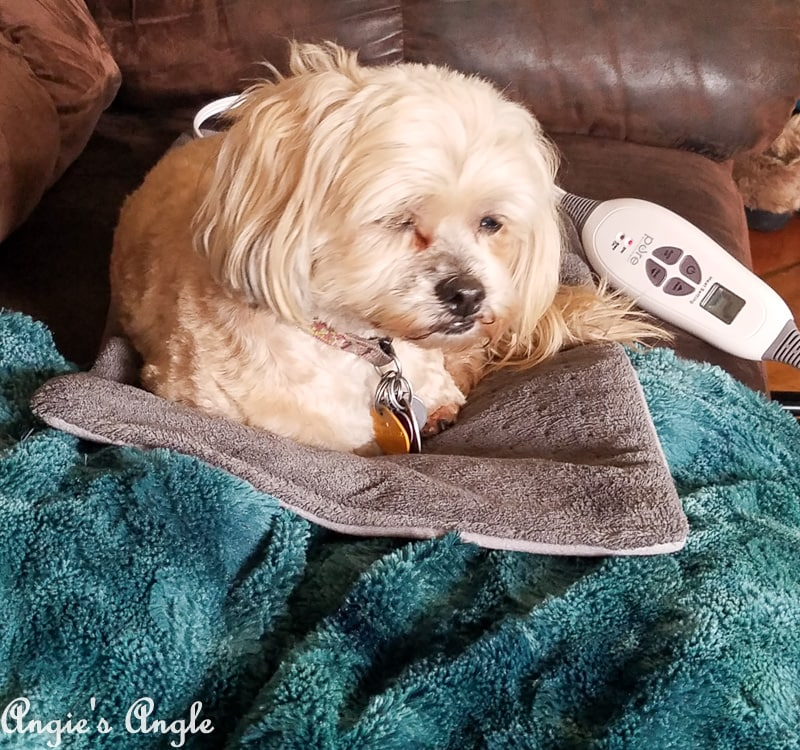 2019 Catch the Moment 365 Week 12 - Day 80 - Roxy Steals Heating Pad