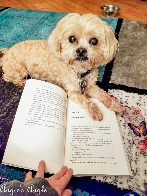 2019 Catch the Moment 365 Week 9 - Day 62 - Roxy Says No to Reading
