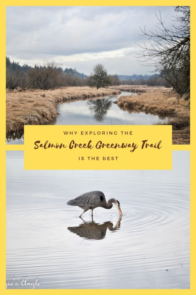 Exploring the Salmon Creek Greenway Trail - Pin