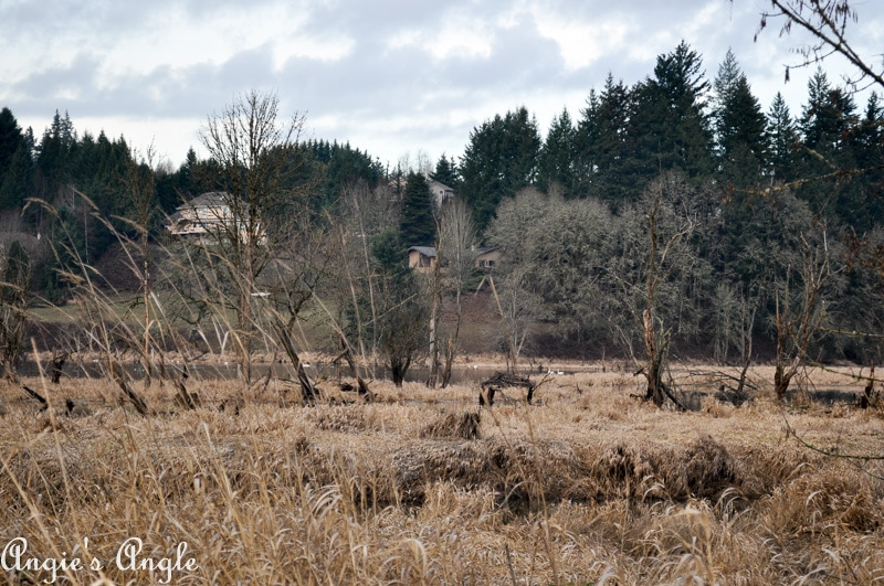 Salmon Creek Greenway Trail January-11