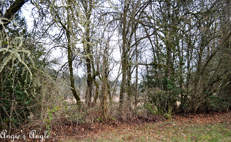 Salmon Creek Greenway Trail January-2