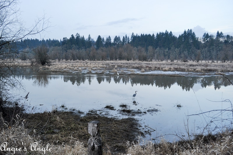 Salmon Creek Greenway Trail January-53