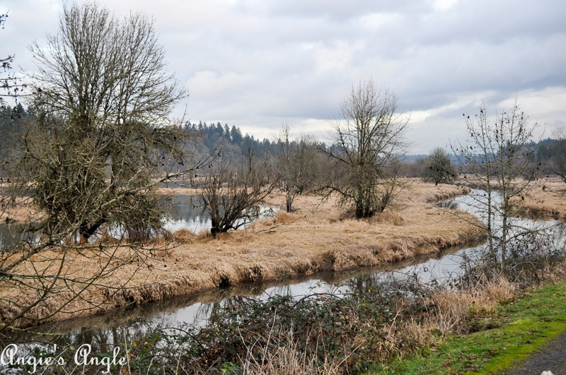 Salmon Creek Greenway Trail January-7