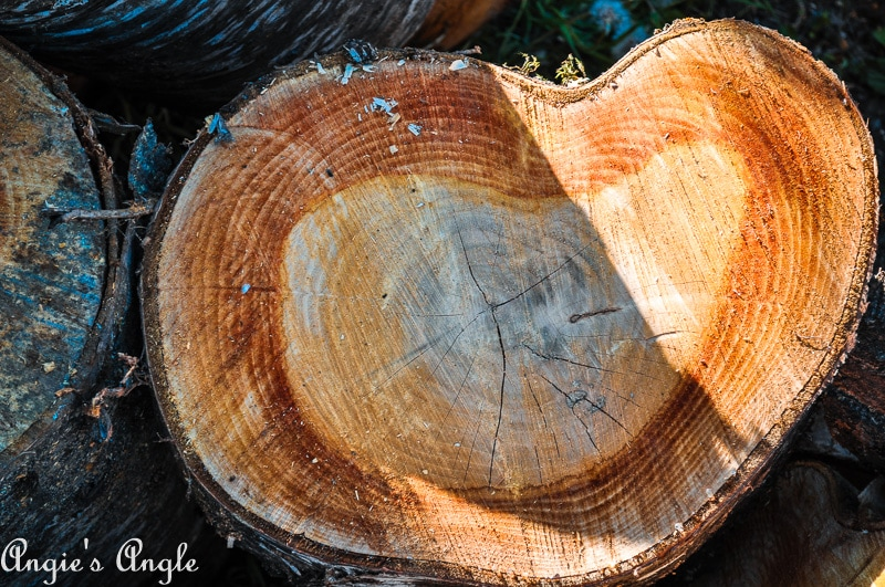 2019 Catch the Moment 365 Week 18 - Day 125 - Heart Shaped Log