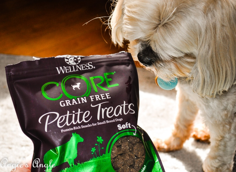 Best Doggy Food-16