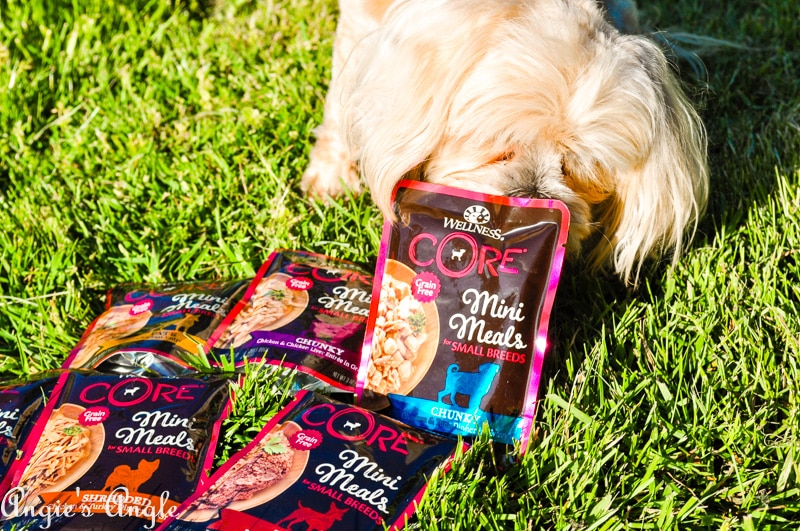 Best Doggy Food-8